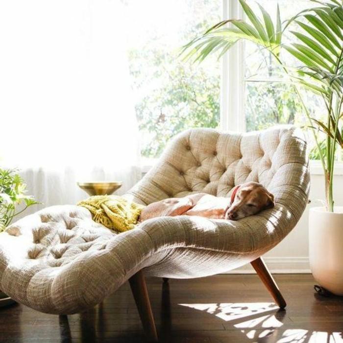 ambiance-cocooning-fauteil-chien-couverture-jaune-plante-grande-fenetre