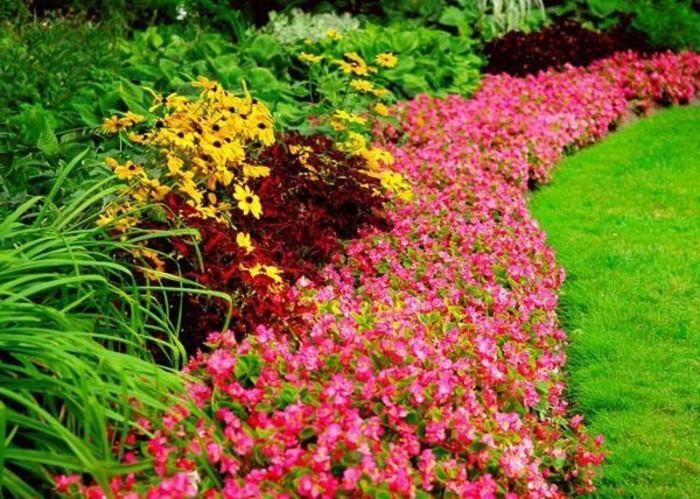 bordure parterre de fleurs composé de fleurs roses, autour d un gazon, idee jardin à aménager soi meme