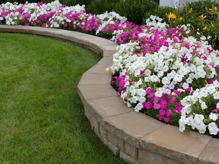 génie jardin, pétunias en mauve et blanc, pétunias, gazon, idée comment aménager un jardin soi meme