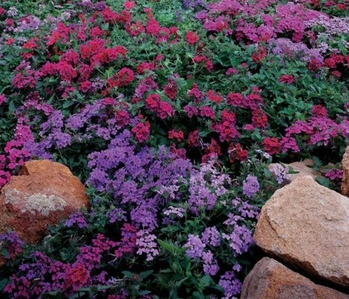exemple-de-rocaille-fleurie-composée-de-fleurs-de-couleurs-diverses-grosse-pierre-decoration-jardin