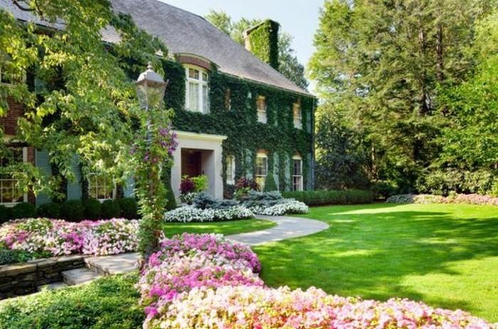 maison rustique enveloppée de lierre, ilot fleuri et bordure parterre de fleurs blanches et rose, pelouse, idee jardin amenagement