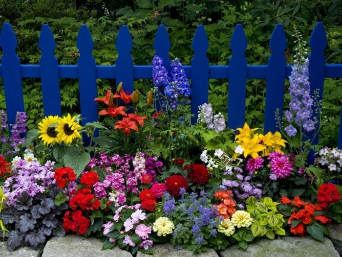 une palissade en bleu indigo, parterre de fleurs différentes et grosses pierres, idée de génie jardin, cadre pastoral