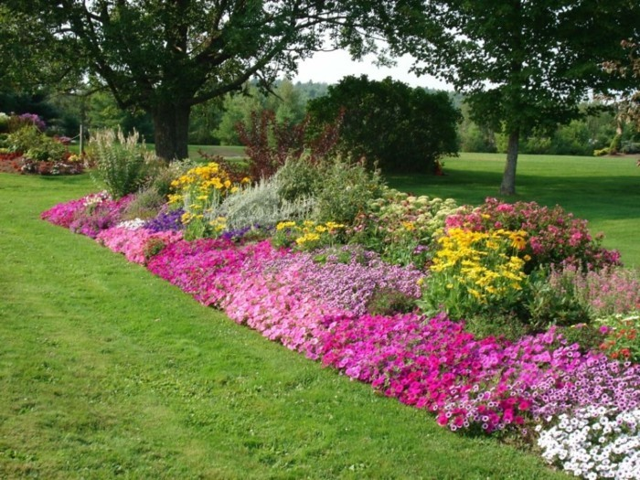 bordure parterre de fleurs,pétunias et autres fleurs, gazon, arbres, idée comment aménager un grand jardin