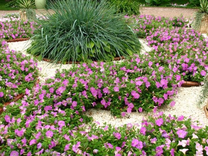 parterre de pétunias, arbuste au centre, idée decoration exterieur, parterre de fleurs avec galets minuscules