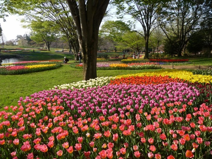 deco exterieur, parc, arbres, ilots de fleurs, comment faire un parterre de fleurs, idée de génie de jardin intéressant