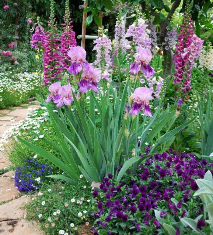 parterre de fleur, fleurs de petite et de grande taille, rose, mauve, violet, aux abords d une allée de pierres