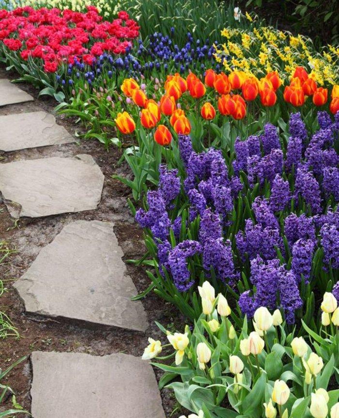 jonquilles, tulipes et jacinthes, parterre de fleurs printanières, allée de pierres, decoration exterieur jardin