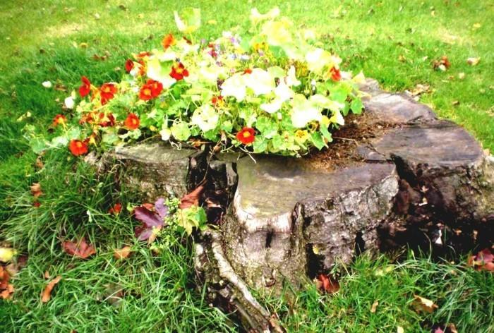 parterre fleuri dans le tronc d'un arbre, gazon, idée intéressante comment faire un parterre de fleurs soi meme