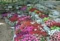 Rocaille fleurie – les secrets du jardin alpin réussi en 70 idées DIY