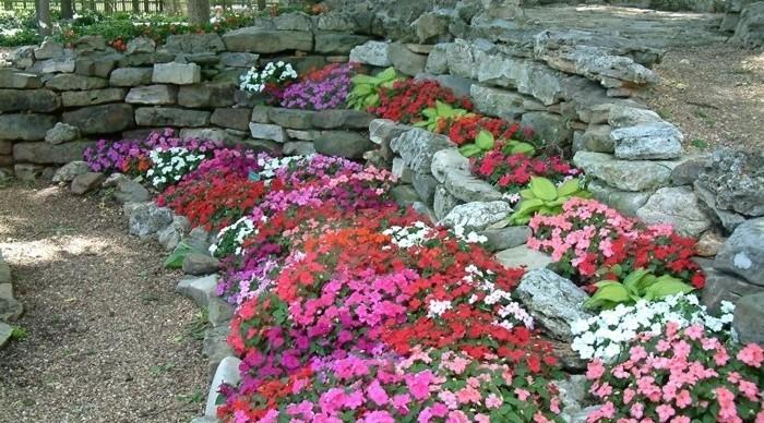rocaille-fleurie-des-pierres-décorées-de-pétunias-de-couleurs-diverses-pierres-et-escalier-en-pierre-amenagement-jardin-alpestre