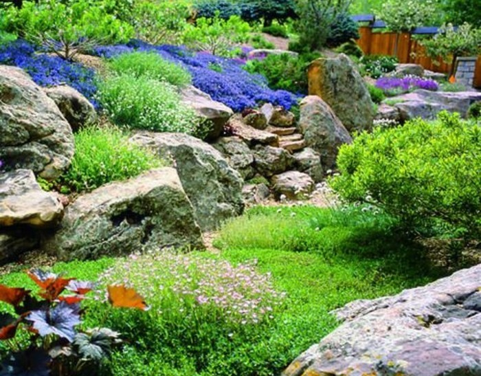 rocaille-fleurie-grosses-pierres-lavande-et-arbustes-verts-idée-amenagement-jardin-vert-plusieurs-couleurs