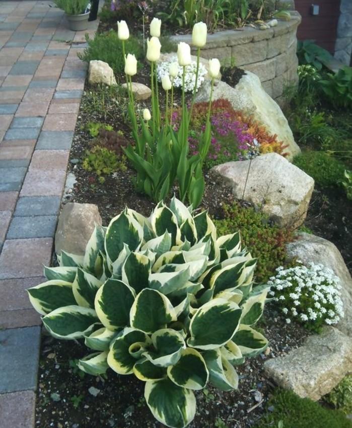 rocaille-jardin-en-pente-escarpée-avec-des-arbustes-fleurs-tulipes-idée-aménagement-coin-nature-le-long-d-une-allée