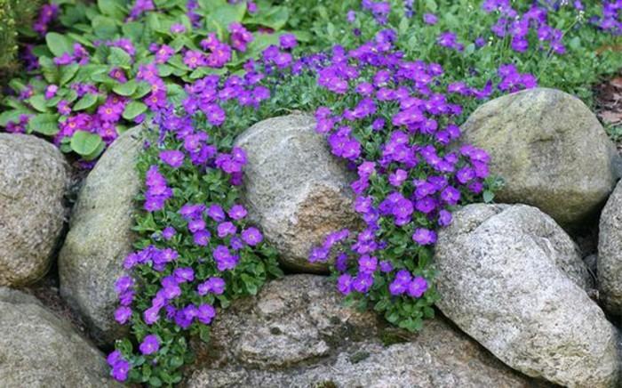 rocaille-jardin-envahi-par-de-fleurs-couleur-violette-idée-d-amenagement-jardin-a-faire-soi-meme