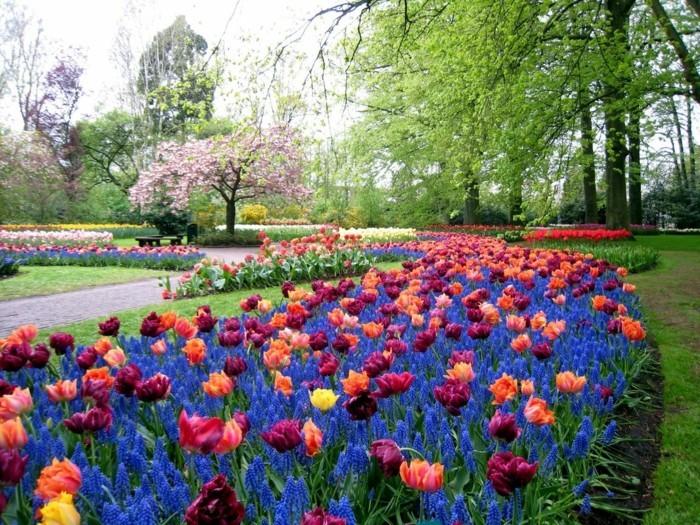 une parterre de fleurs, tulipes, gazon, arbres, allée, idée comment faire une parterre de fleurs dans un jardin énorme