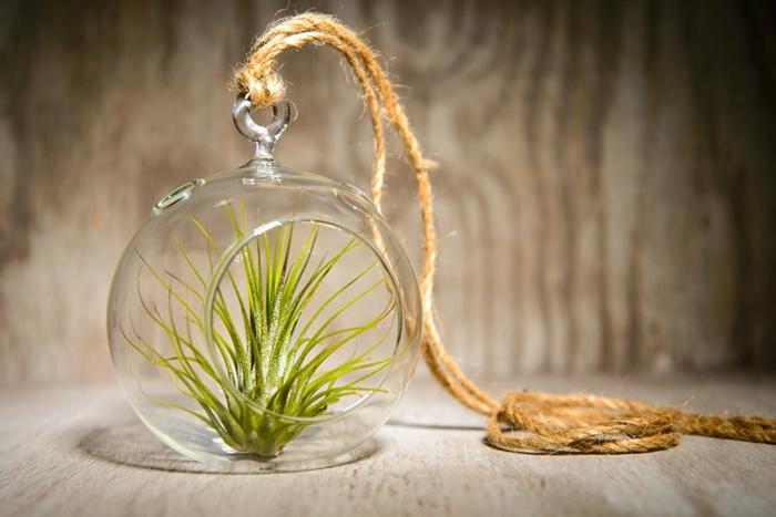 plante en bocal fermé, longue corde, faire un terrarium avec plantes vertes