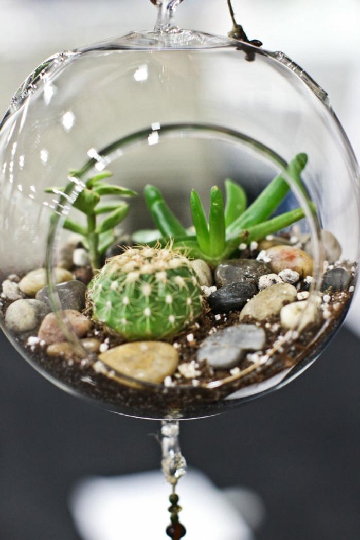 terrarium suspendu, récipient en verre, projet DIY, petit cactus, cailloux décoratifs