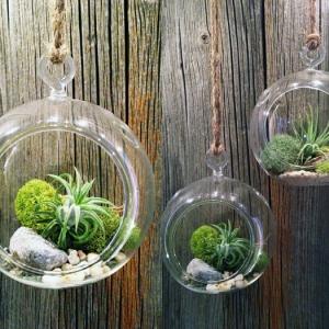 87 photos et tutos DIY faciles pour découvrir le charme du terrarium suspendu