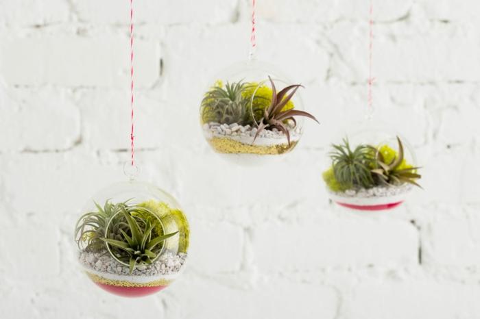 plante bocal, terrarium suspendu, boule en verre à suspendre, murs blancs, corde blanc et rouge