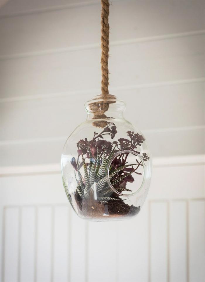 terrarium suspendu, corde longue, terreau, plante en bocal fermé