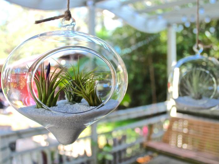 terrarium plante, sable blanc, plante en bocal fermé, diy décoration pour le jardin