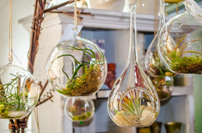 terrarium suspendu, longue corde, récipient en verre, jardin miniature, plante en bocal fermé