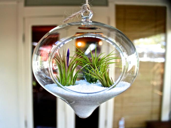 terrarium végétal, récipient en verre, sable blanc, cailloux, plante bocal