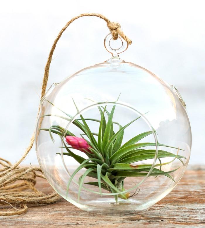 terrarium succulente, corde longe, boule en verre à suspendre, table en bois