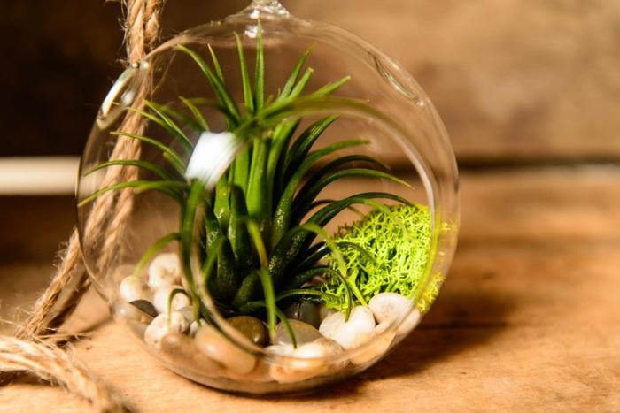 faire un terrarium, boule en verre à suspendre, cailloux décoratifs, corde longue