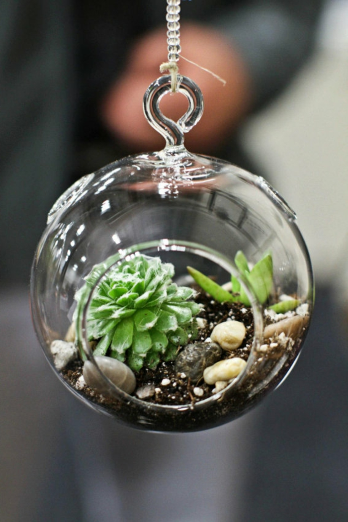 terrarium plantes grasses, cailloux décoratifs, terreau, boule en verre à suspendre