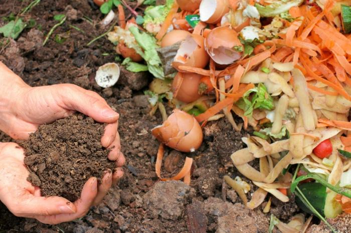 coquille d oeuf compost, des peaux de pommes de terre, carottes, déchets biodégradables, et coquilles d oeufs, engrais