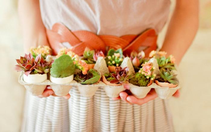 coquille oeuf germoir plantes, des succulents dans des mini pots de fleurs coquilles d oeufs, idée decoration florale, activité créative paques