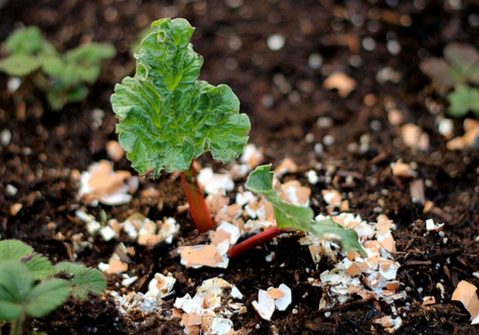coquilles d oeufs au jardin, créer une couche de coquilles d oeufs autour des plantes, fertiliser, nourrir la terre en calcium