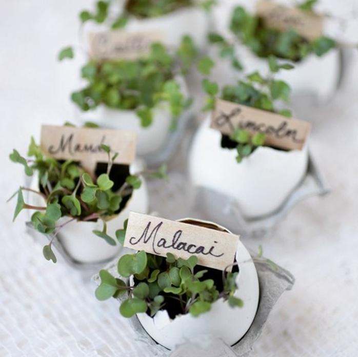 porte nom table placé dans une coquille d oeuf vide, petites fleurs vertes, idée activité manuelle printemps créative