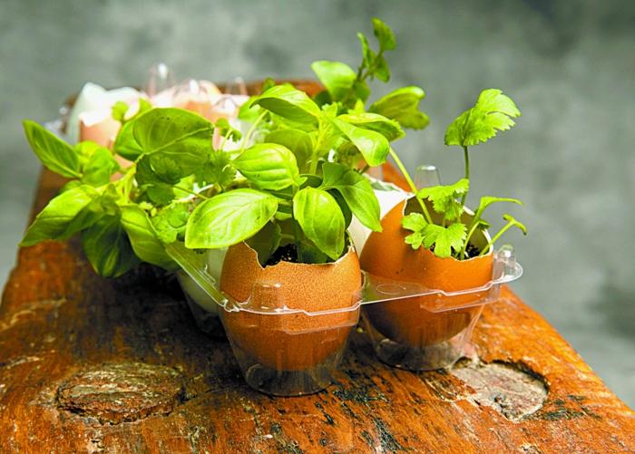 coquilles d oeufs au jardin, petits germoirs à fabriquer soi meme, terreau, plantes herbes, idée bricolage avec des coquilles d oeufs