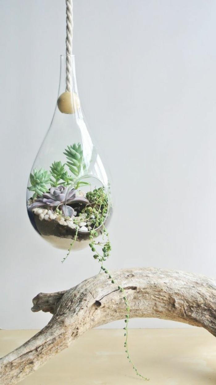terrarium plantes grasses, récipient en verre à suspendre, branchette, corde, terrarium végétal
