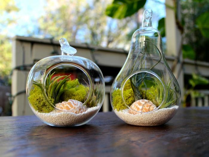 terrarium succulente, sable blanc, cailloux décoratifs, coquillages, récipient en verre, plante en bocal fermé