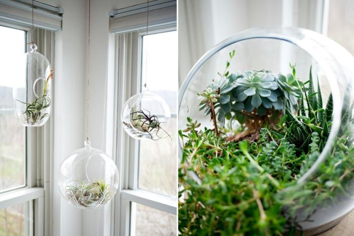 terrarium suspendu, diy décoration, grandes fenêtres, boule en verre à suspendre