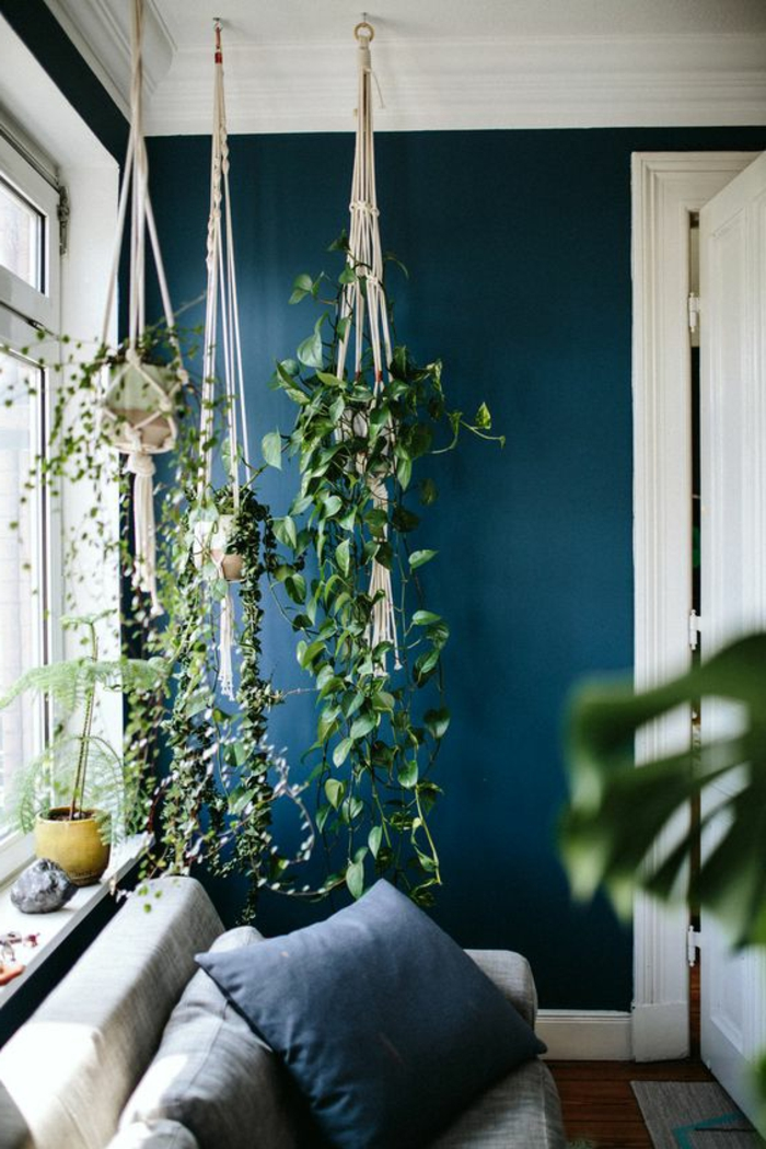 mur bleu canard, plantes vertes suspendues, sofa gris clair, coussins