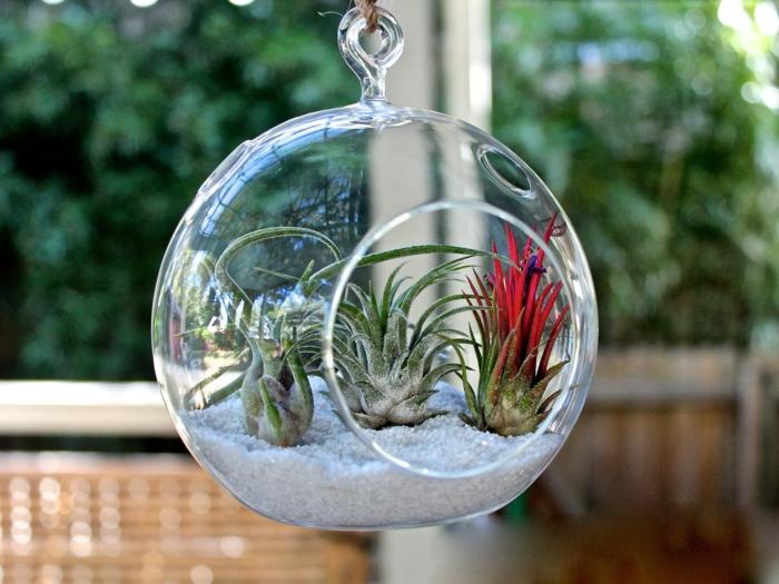 terrarium suspendu, sable blanc, cailloux, boule en verre à suspendre, terrarium bocal