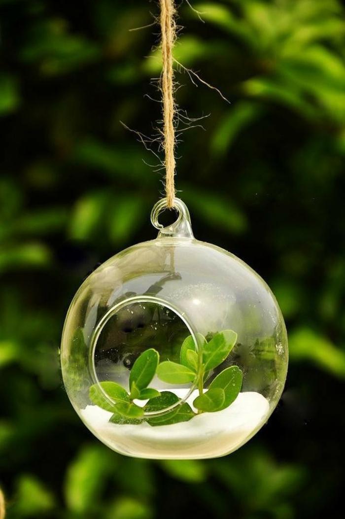 terrarium suspendu, diy décoration, boule en verre à suspendre, terrarium plante