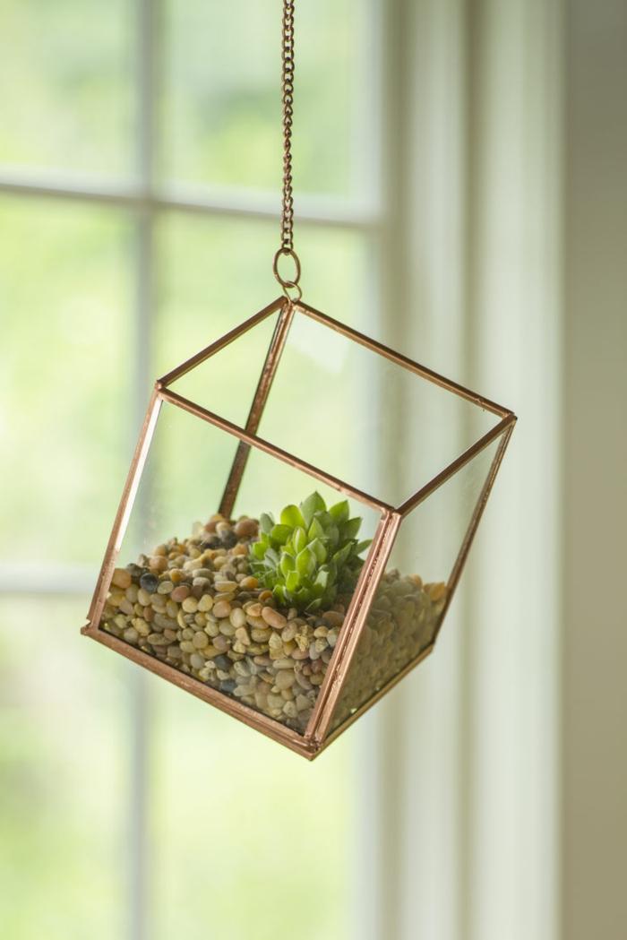 terrarium plante, récipient en verre, cailloux décoratifs, terrarium plantes grasses