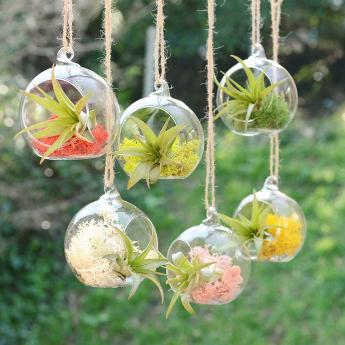 terrarium suspendu, diy décoration, boule en verre à suspendre, air plants