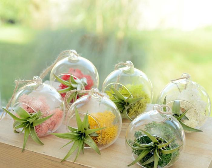 boule en verre à suspendre, terrarium succulente, air plant, diy décoration