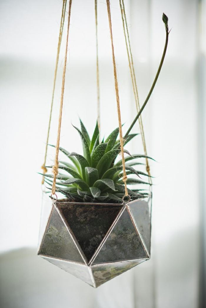 terrarium végétal, plante verte, terreau, récipient en verre, terrarium suspendu