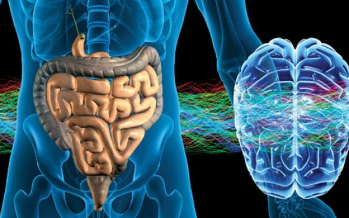 les probiotiques harmonisent l'intestin et le cerveau