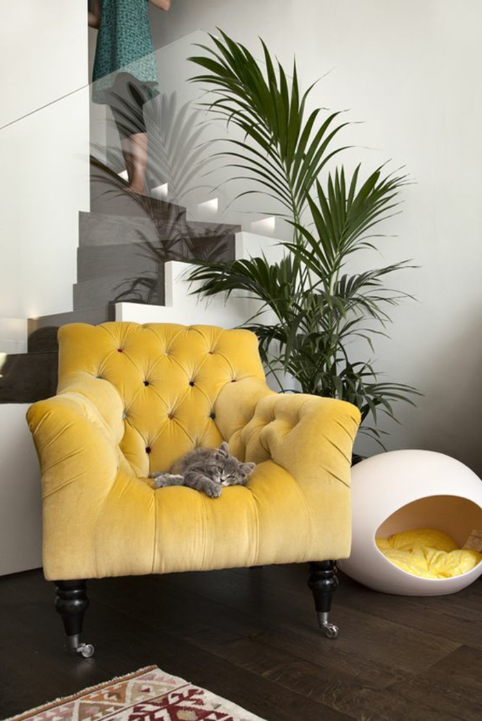 salon gris et jaune, fauteuil capitonné et niche de chat ovale, plante verte