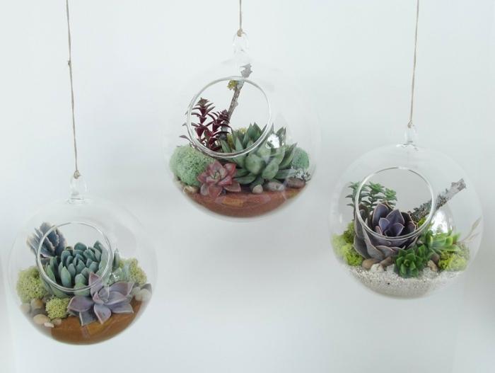 plante en bocal fermé, terrarium plantes grasses, diy décoration, terrarium succulente