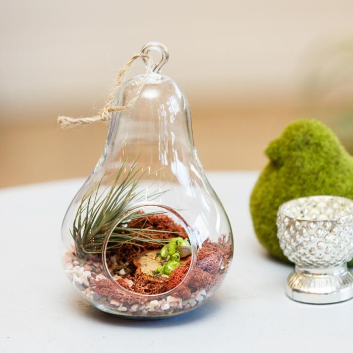 jardin miniature, récipient en verre, air plant, terrarium végétal