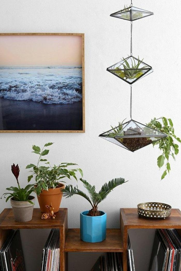 terrarium plante, paysage de mer, meuble en bois, plantes vertes, pot à fleur bleu