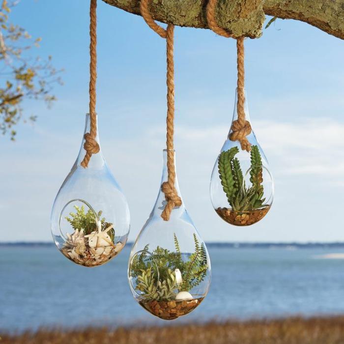 plante en bocal fermé, corde sur branchette, vue sur la mer, terrarium végétal